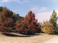 Vegetación de las Sierras